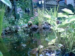 Gartenteich for Goldorfen im teich