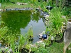 Gartenteich for Spiegelkarpfen im gartenteich